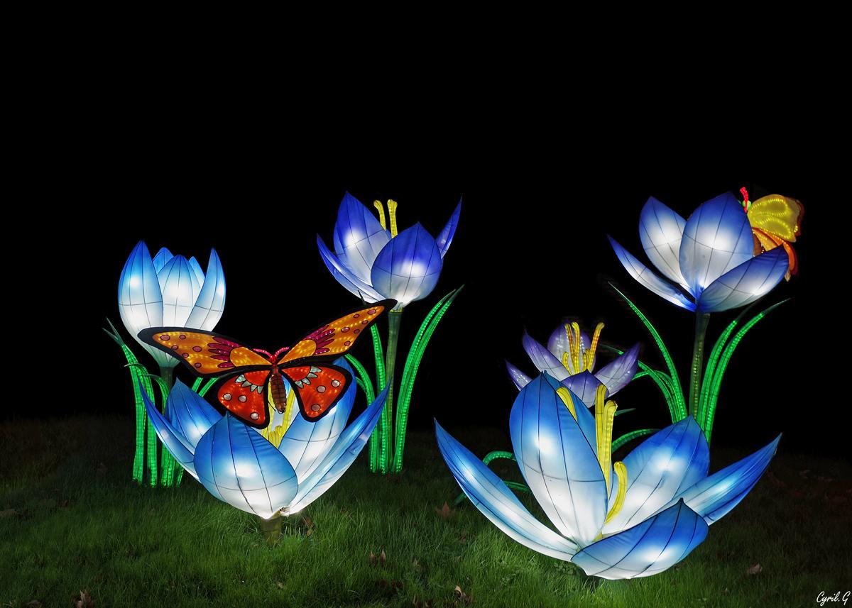 Festival des lanternes chinoises 33253534148_5bbe78ba8d_o