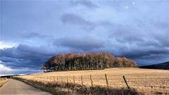 Tree circle near Clatt in Aberdeenshire