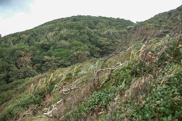 九棚山登山步道 4