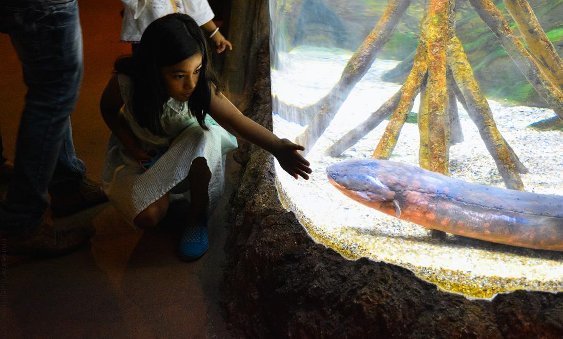 Singapore-zoo-(3)