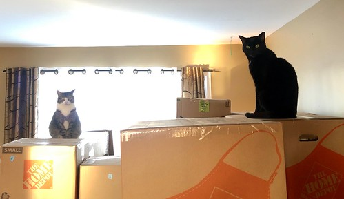 Cats and moving boxes