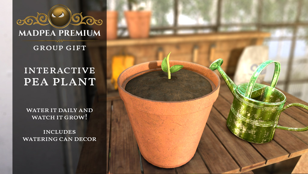 MadPea Premium Gift Pea Plant