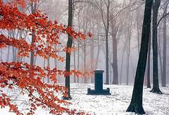 "Cincinnati - Spring Grove Cemetery & Arboretum ""Solitary Marker On A Foggy/Winter Morning"""