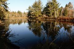 No Name pond at dawn this morning