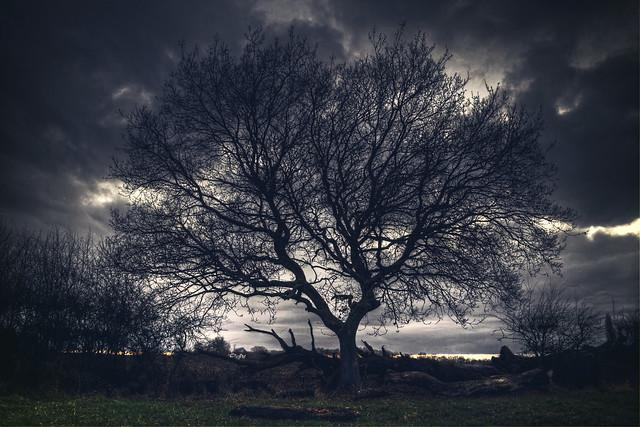 The Naked Tree [Explore], Nikon 1 J5, 1 NIKKOR VR 10-30mm f/3.5-5.6 PD-ZOOM