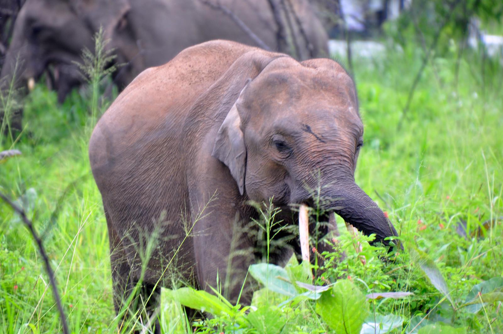 VER ELEFANTES SALVAJES EN SRI LANKA ver elefantes salvajes en sri lanka - 46922003392 0e4ec6e93a h - Ver elefantes salvajes en Sri Lanka