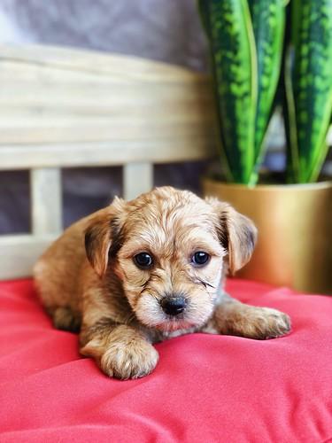 Petopia Pet Store Lynchburg Va Puppies For Sale Virginia