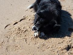 herring cove beach - juniper + clam