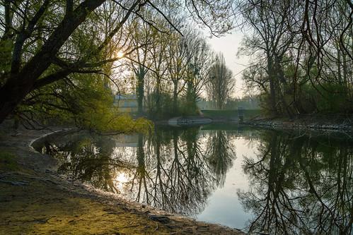 Morgenstimmung im Auenwald