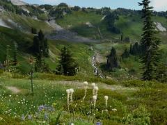 Alta Vista Trail #1