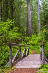 Hiking Bridge Redwoods