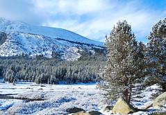 New Sun on New Snow, Yosemite High Country, CA 2015