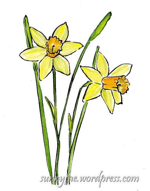 daffodil watercolour sketch