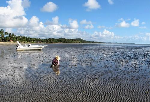 Marisqueira - Praia de São Bento - Maragogi - Alagoas - Brasil