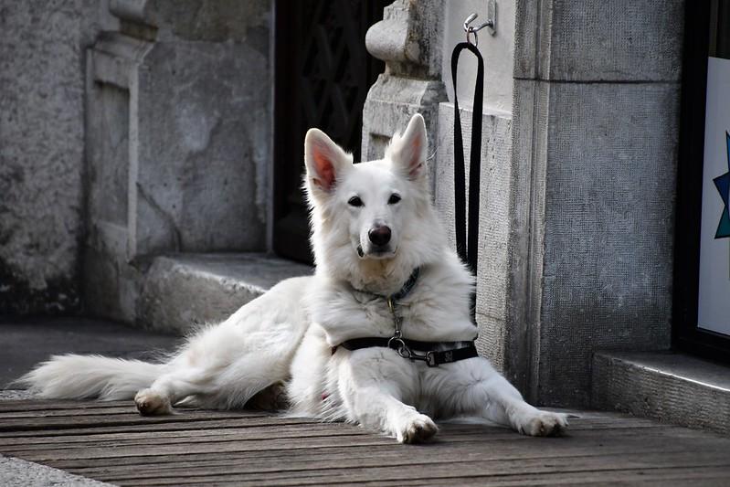 Dog 19.02 (2)