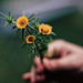 Flores para un lunes