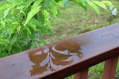 12. Green leaf #52weekchallenge #photography  #canon5dmarkiii  #greenleaf