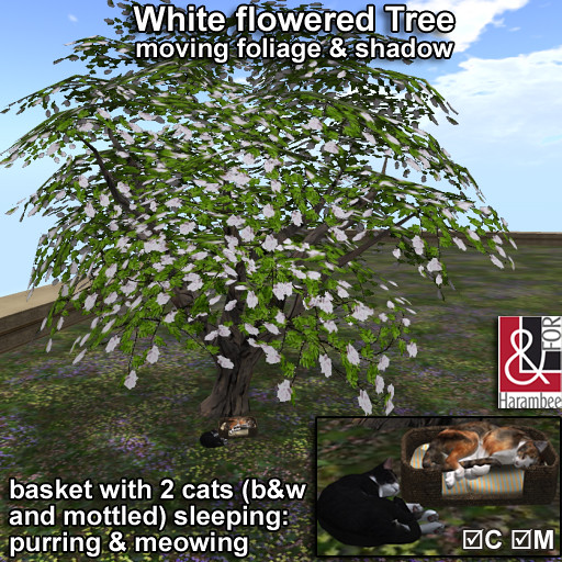 White flowered Tree & cats