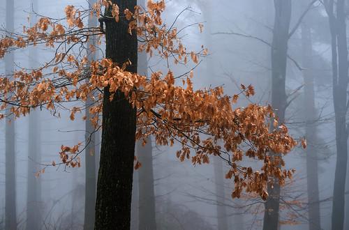 Farbe im Nebelwald