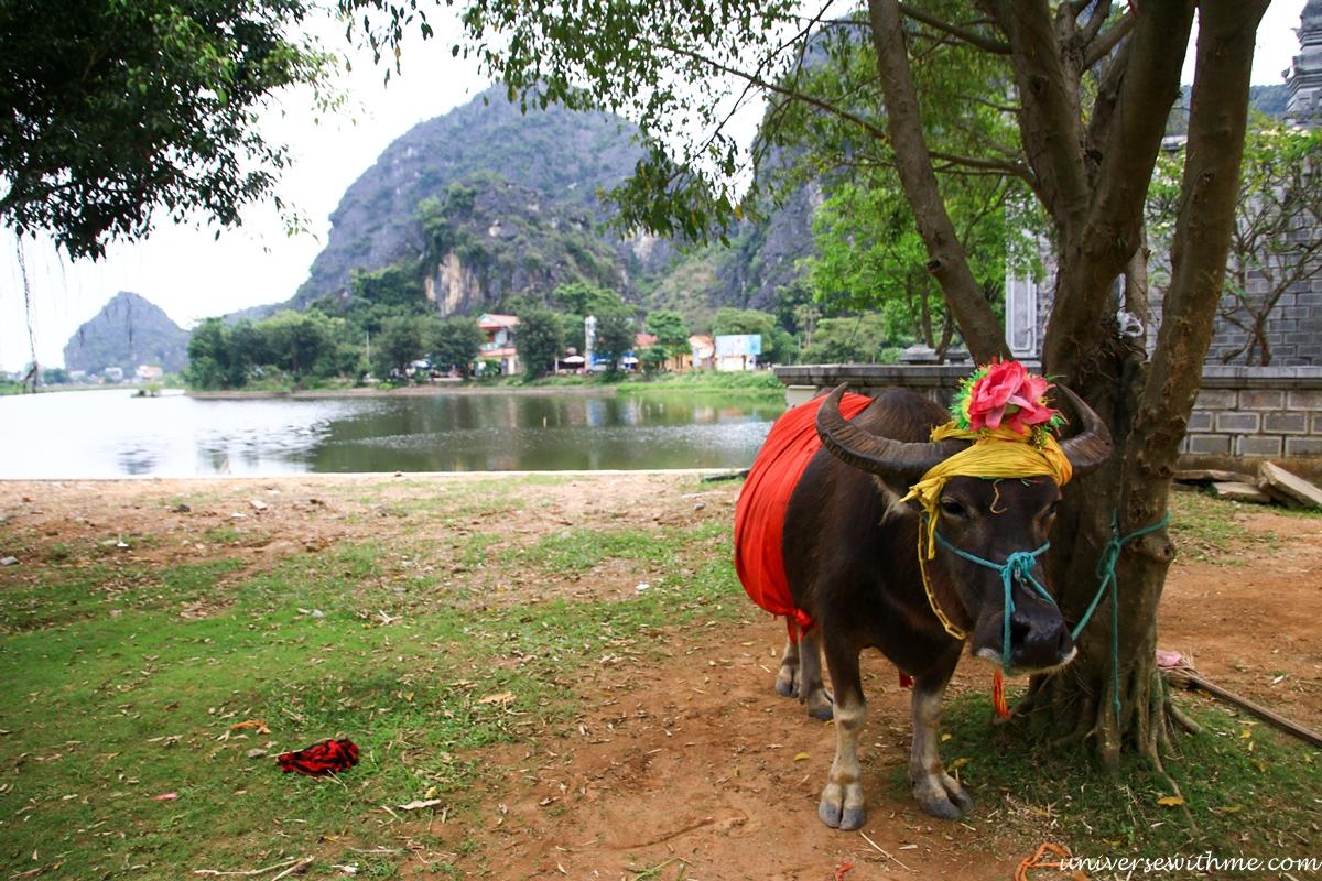 Vietnam_028