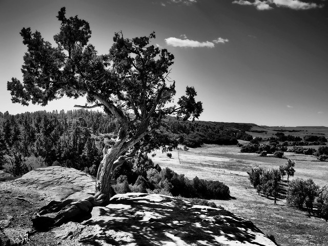 Castlewood Canyon Lone Tree BW