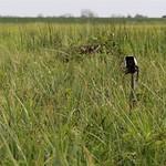 Nest Camera Guy Anderson RSPB