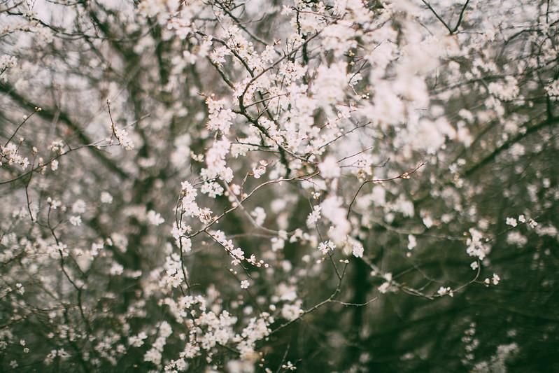 white blossom-41