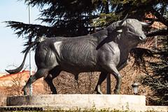 glorieta, plaza toros, 1plano toro