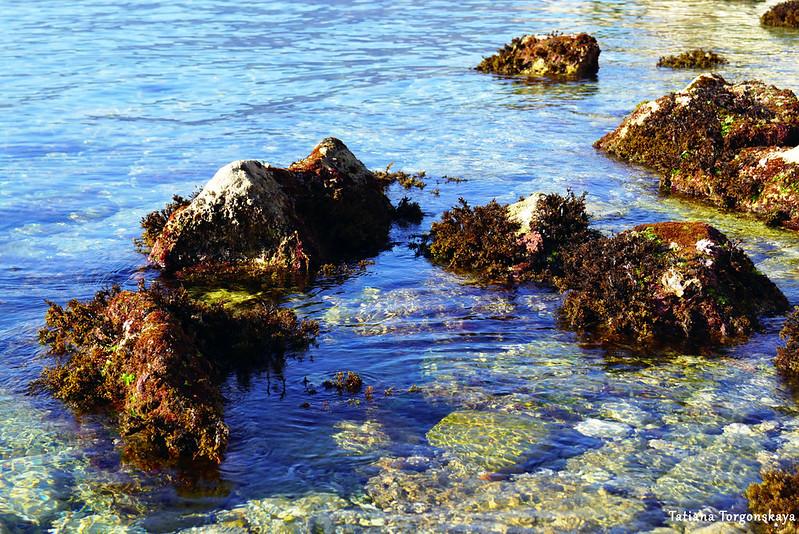 Камни, заросшие водорослями
