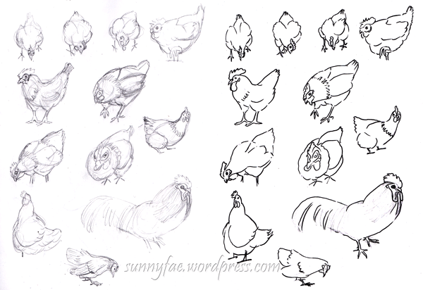 first chicken pencil sketches