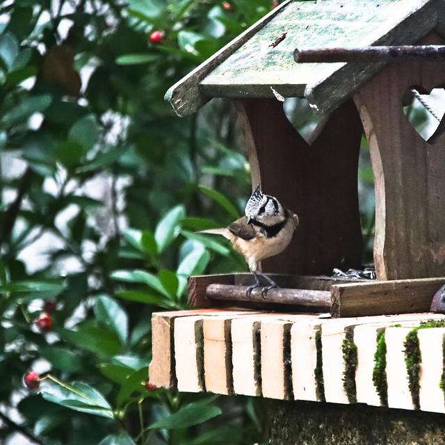 Les oiseaux en hiver 1