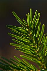 Backlit Needles