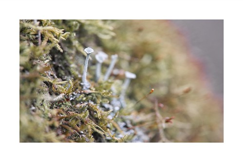 Mousse et champignons