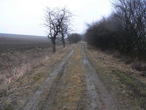 20100317 0204 148 Jakobus Weg Feld Allee Bäume