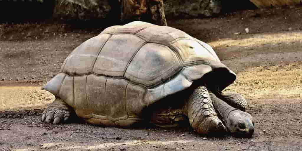 Une tortue inconnue âgée de 100 ans trouvée aux Galapagos