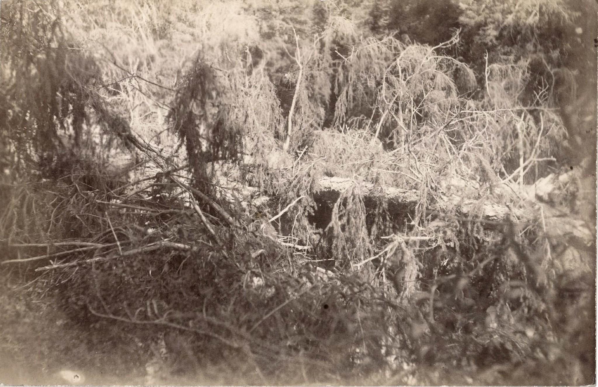 21. Ельник в Терскейских горах
