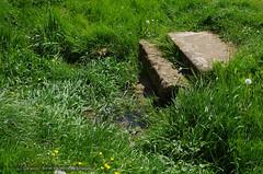 Source de la Meuse