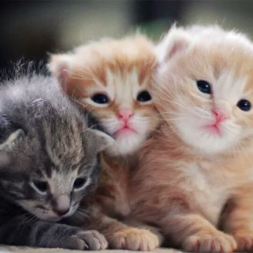 watch videos, photos a nd stories of cute puppies at https://ift.tt/2TddUDe (the link given in bio) for more cute, informative and funny pictures and videos on puppies and cats . Stay Tuned! .. .. .. .. #happiestpuppies #paw #catsofinstagram #cats #catsta