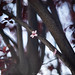 ILCE-7M2-04471-20190321-1752-Pano // Helios-40 85mm 1:1.5