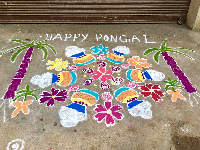 Mom's Pongal Kolam