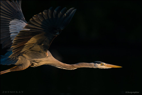 Heron | by Nikographer [Jon]