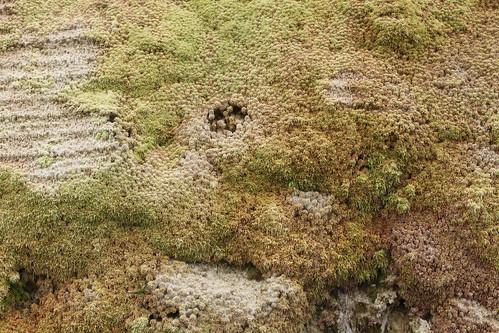 Pico vegetation density 3