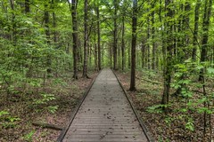 Above Ground Forest of Mammoth Cave National Park