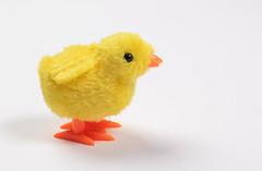 Little chicken on white background