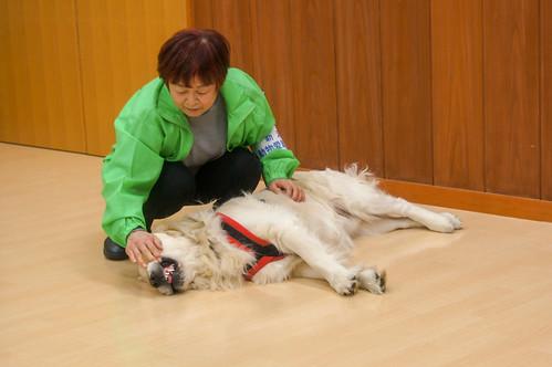 犬の飼い方・しつけ方教室