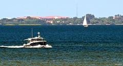 Blue Boat(ing) Tampa Bay Florida - IMRAN™