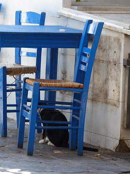 chat noir et chaise bleue