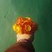 Bouquet of suns. by Hijo de la Tierra.