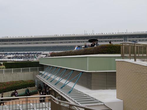 中山競馬場の内馬場投票所屋上の観戦スポット