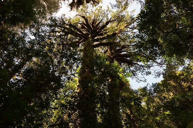 DSC_9748.jpg, Nikon D810, AF-S Zoom-Nikkor 14-24mm f/2.8G ED